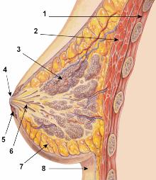 anatomiya-garda
